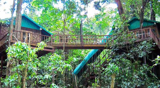 ourjunglehouse_08